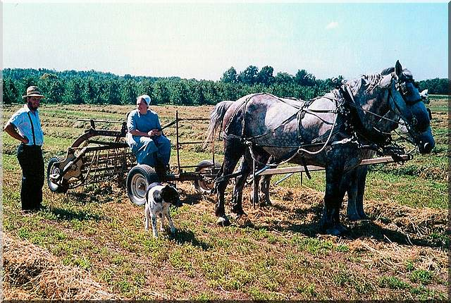 An Amish husband and wife plowing with 2 horses