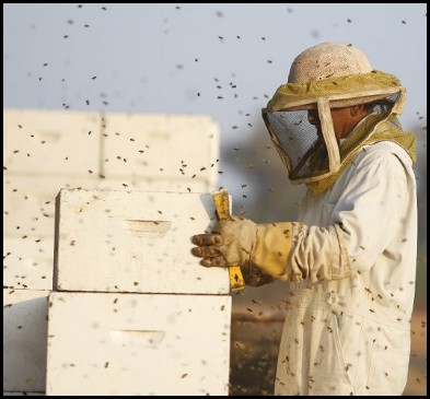 a beekeeper robbing a hive in his protective suit, gloves and veiled hat