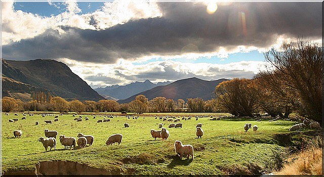 New Zealand Farm Holidays