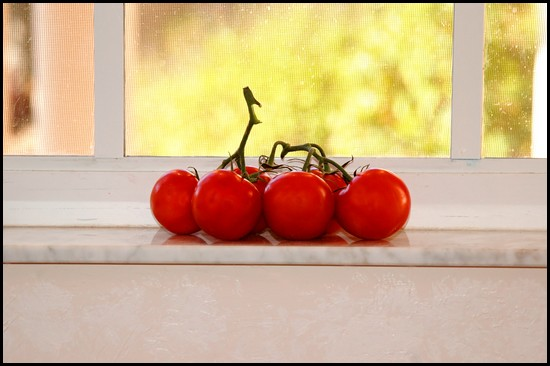 Tomatoes ripening on a window sill