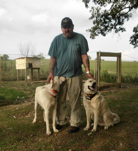 Our 2 Akbash livestock guardian dogs