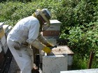 Bee keepers calendar thumbnail