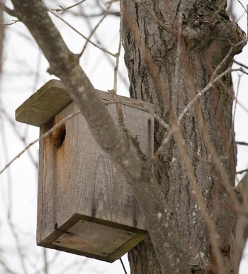homemade bird house for backyard birds