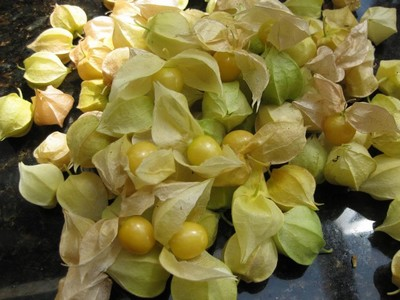 Recently harvested Cape Gooseberries on a black table top.
