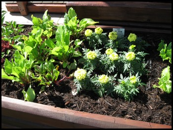 A Square Foot Gardening Layout with Great Tips for Garden Designs