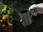 A watering can for indoor and container gardening