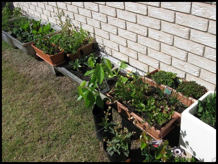 Growing Vegetables in Containers for Small Vegetable Varieties