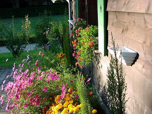 A cottage garden in full bloom.
