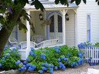 A country cottage surrounded by hydrangeas.