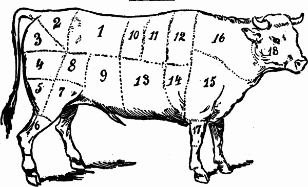 cuts of meat - beef butchering