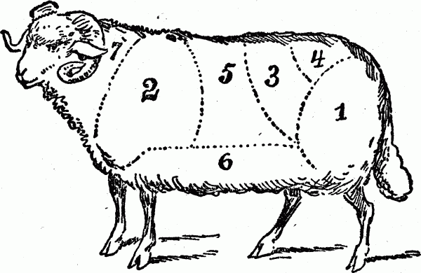 cuts of meat - mutton butchering