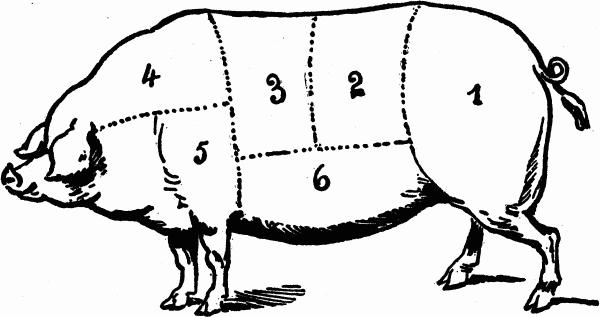 cuts of meat - pork butchering