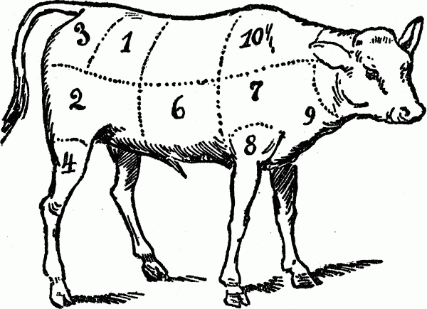 cuts of meat - veal butchering