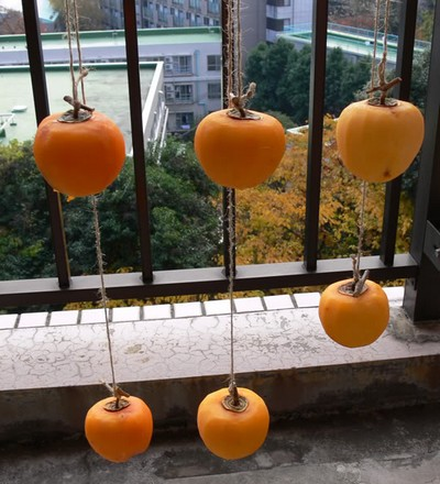 A1 novel way of drying fruit. Persimmons drying from a balcony.