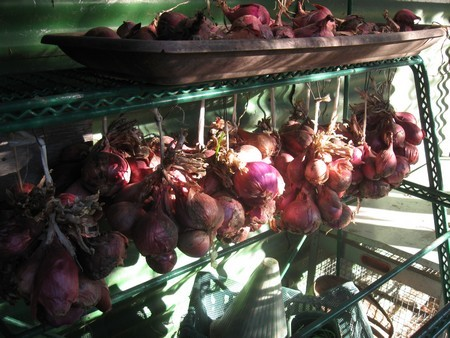 drying onions