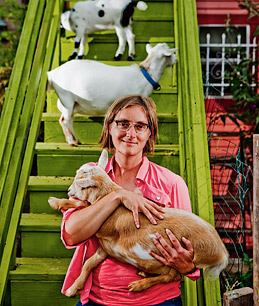 3 nigerian-dwarf-goats with 2 on some green steps and the other being held