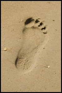 an ecological footprint
