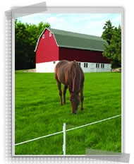Electric fencing for livestock