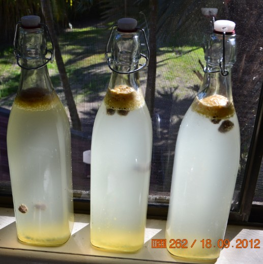 3 bottles of homemade ginger beer on a window sill.
