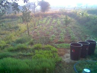 dawn kitchen garden