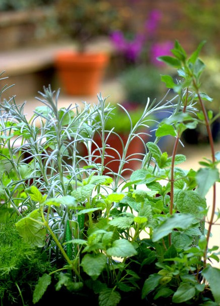 a collection of herbs growing at home
