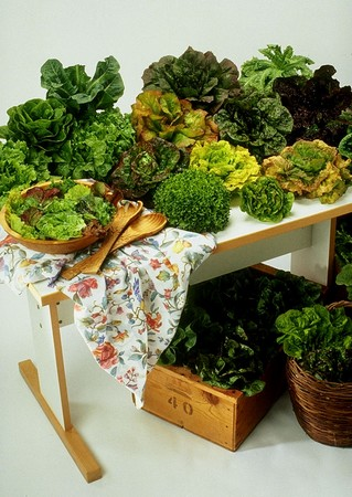 a display of the various types of lettuce