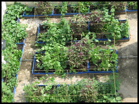 Terrace gardening growing vegetables in containers for Terrace garden in india