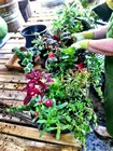hanging flower baskets thumbnail