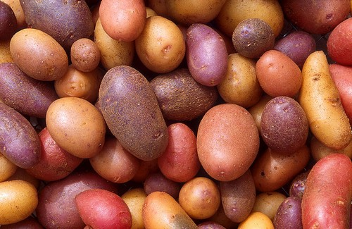 Heirloom Potatoes