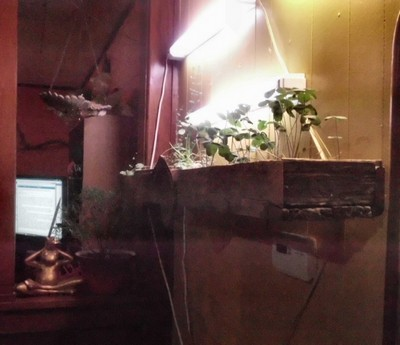 Indoor Herb Garden Winter Winter gardening is possible when you have an indoor garden indoor herb garden growing under grow lights workwithnaturefo