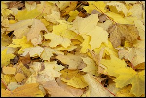 fall leaves reading for composting