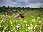 A meadow of herbs and a butterfly.