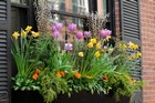 Planting window boxes thumbnail