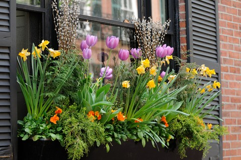 planting window boxes