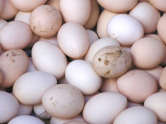 Fed Govt to Provide 1bn Eggs for School Feeding Programme