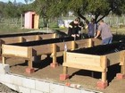 Raised bed gardening thumbnail