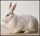 Breeding rabbits thumbnail