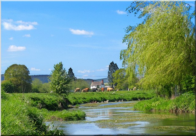 River Onny in Shropshire with a field of cows