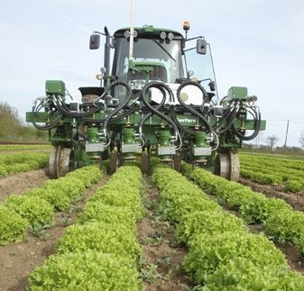 Robocrop inrow weeder in a field of lettuces.