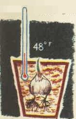 A pot, a bulb and a thermometer.