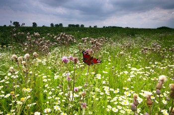 spring field flowers and a butterfly