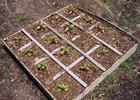 Square foot gardening thumbnail