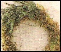 pine sprigs for making a Christmas Wreath