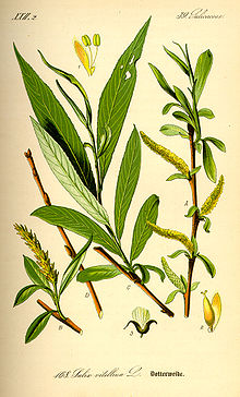 willow bark for asprin