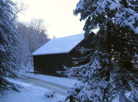 snow on fir trees and a barn in a winter garden
