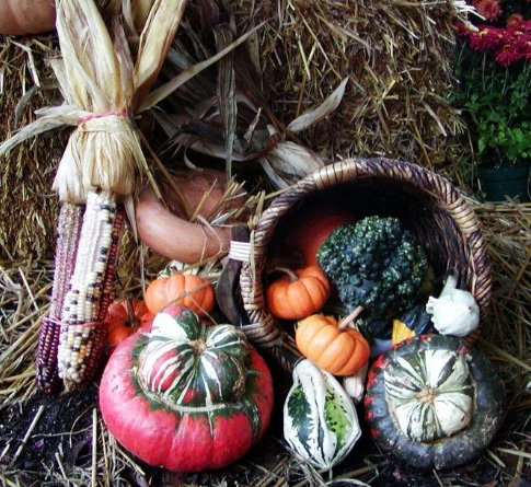 Gourds from an autumn harvest of growing your own