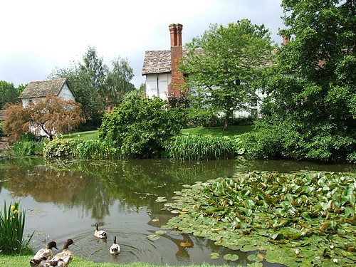 A country home with a pond and some ducks