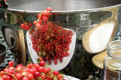 redcurrants, a bowl and sugar ready to make jelly recipes
