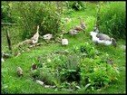permaculture thumbnail